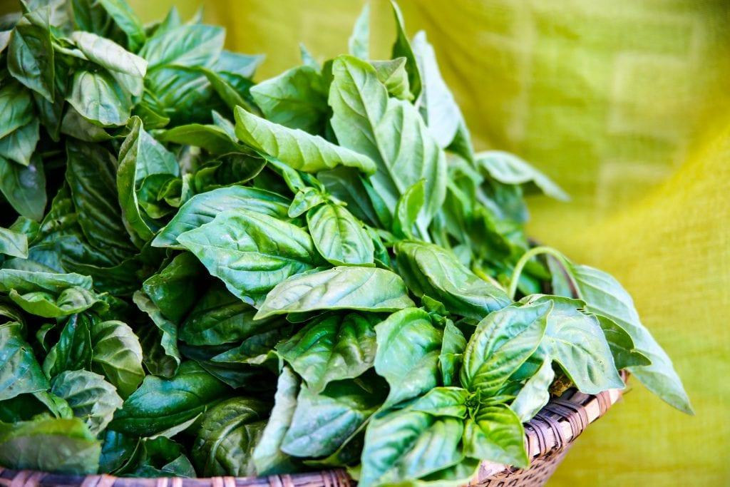 Basil, pesto, Italian cuisine